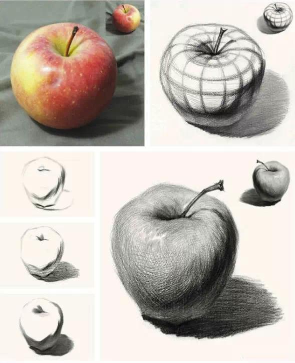 对,你知道苹果的结构是这样的